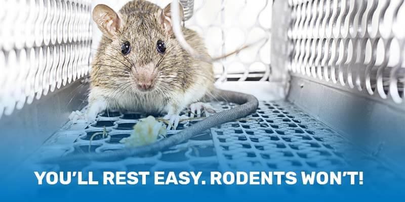 Rat & Mice Control | Rodent Removal Company | Imagine Care