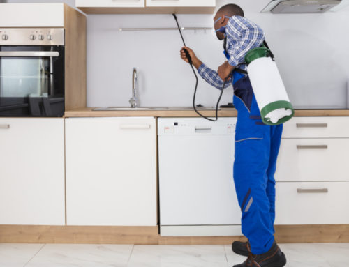 Valuable insights on kitchen pest control