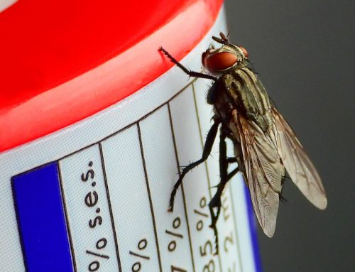 How To Get Rid Of Houseflies
